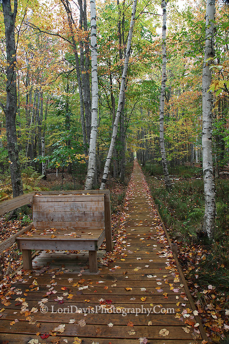 Bench Along the Jessup Path  #A83