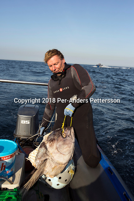 MARGATE, SOUTH AFRICA APRIL 25: A diver holds a bait that is used to attract sharks during a shark dive trip, with an African Adventure diving boat, during an early morning dive at Protea Banks on April 25, 2018 in KwaZulu Natal, South Africa. The area is one of the best in South Africa for shark encounters. (Photo by: Per-Anders Pettersson/Getty Images)