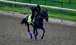 LOUISVILLE, KY - MAY 03: Instilled Regard, trained by Jerry Hollendorfer, exercises in preparation for the Kentucky Derby at Churchill Downs on May 3, 2018 in Louisville, Kentucky. (Photo by John Vorhees/Eclipse Sportswire/Getty Images)