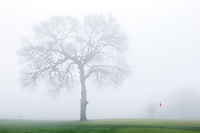 Fog settles in on the 18th hole of Wilcox County Club outside of Red Bluff, CA