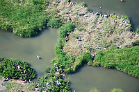 Brown Pelican (pelecanus occidentalis) nesting colony in Barataria Bay from the air. Plaquemines Parish, Louisiana. July 2010.