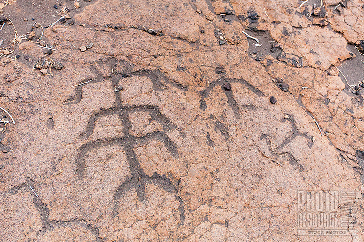 Hawaiian petroglyphs or ki'i pohaku at Puako Petroglyph Park, Big Island.