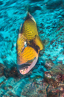 Images of Fish and Reefs in the Similan National Reserve and Richelieu Rock taken in the Andaman Sea in Thailand