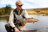 An angler holds a handsome brown trout on a small central Montana stream.