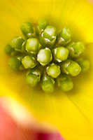 Close up of Dogwood flowe
