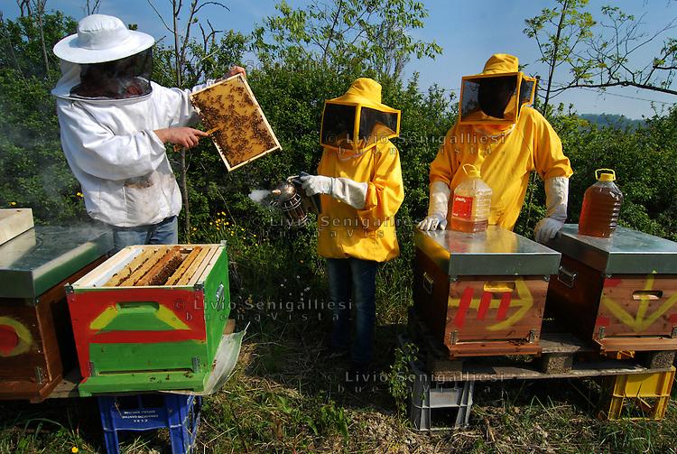 Barbiano / Parma / Italia<br /> Membri della cooperativa agricola 'Lo sciame' sostenuta da CIAC Parma. Il titolare italiano e tre rifugiati producono miele sulle colline del parmense.<br /> Foto Livio Senigalliesi