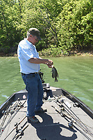 NWA Democrat-Gazette/FLIP PUTTHOFF <br /> Glenn adds another crappie to his livewell May 16 2019 by working a jig around bushes.