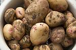 New potatoes freshly dug up