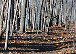 seen in Esopus Bend Nature Preserve, in Saugerties, NY, on Friday, March 4, 2016. Photo by Jim Peppler. Copyright Jim Peppler 2016.