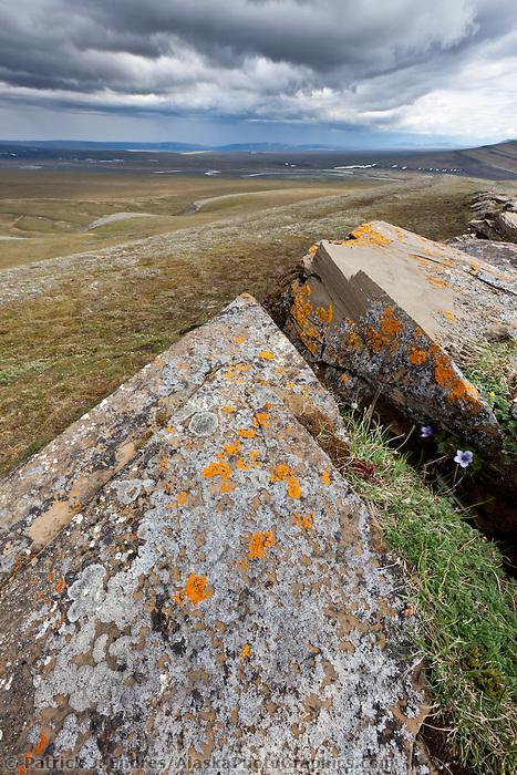 Orange lichen on rocks, Utukok uplands, National Petroleum Reserve Alaska, Arctic, Alaska.