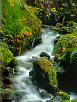 769550384 a small stream meanders through fern and moss covered boulders in redwood trails state park in coastal southern oregon