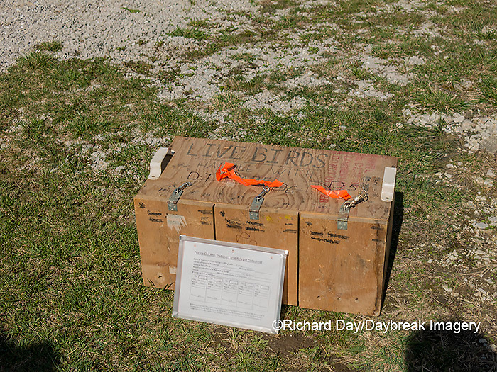 00842-06308 Greater Prairie-Chickens (Tympanuchus cupido) and paperwork from Kansas to be released in Marion Co. IL