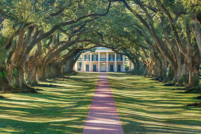 The picturesque oak lined pathway to New Orleans' historic Oak Alley Plantation.