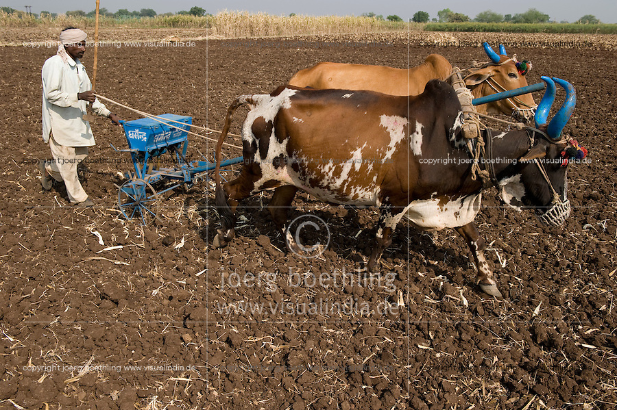 INDIA Madhya Pradesh Khargone , cotton farmer with ox and sowing tool at field / INDIEN Khargone , Bauer mit Ochsengespann und Saatgeraet bei Aussaat von Baumwolle