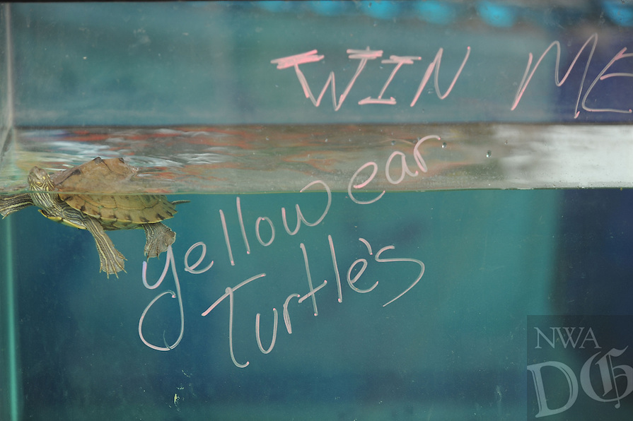 NWA Democrat-Gazette/ANDY SHUPE<br /> A turtle swims Tuesday, Aug. 4, 2015, during the 117th annual Tontitown Grape Festival. The festival continues through Saturday. Visit nwadg.com/photos to see more photographs from the festival.