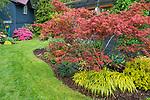 Vashon-Maury Island, WA: Perennial garden featuring golden Japanese forest grass (Hakonechloa macra 'Aureola'), and Japanese maple