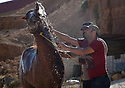 A PIECE OF JORDAN - TRAVEL FEATURE. HORSE GROOMING WITH ANAS TWASSI AND MOSA'AD NASARAT . PHOTO BY CLARE KENDALL. 07971 477316.