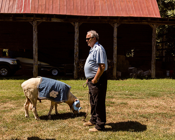July 31, 2017. Chapel Hill, North Carolina.<br /> <br /> Don Basnight holds Rameses on a tether outside the barn in which he lives. <br /> <br /> Basnight is one of the members of the Hogan family who have long been the caretakers of Rameses the Ram. The current Rameses is the 21st in the line of the University of North Carolina's live mascot.