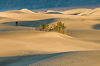 A lone person in the Mesquite Flats sand dunes in Death Valley