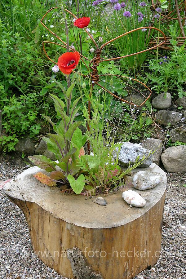 Bepflanzter Stamm im Garten, Naturgarten, hohle Baumscheibe wurde mit Mohn bepflanzt, aus Weidenruten wurde ein Schmetterling geformt