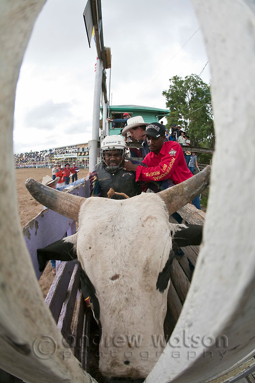 Indigenous cowboy in bucking chute during the bull ride competition at Mareeba Rodeo.  Mareeba, Queensland, Australia