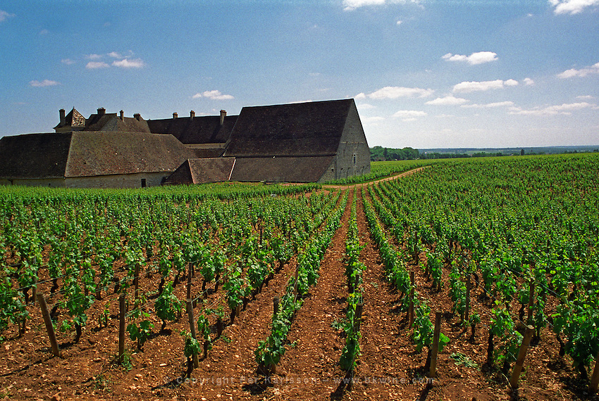 The Clos des Vougeot ex Cistercian monastery and vineyard from behind in Vougeot, Bourgogne