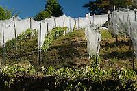 Vignobles Terres de Causse
