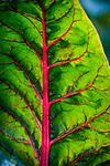9.25.18 - Leafy G....
