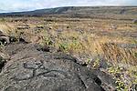 Pu'u Loa Petroglyphs, Hawaii