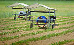Motorized shaded carts at Tebbs Farms and Greenhouses in Nisbet