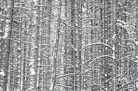 Dense snowfall at -17 degrees F in a dense forest night in the Colorado Rockies.