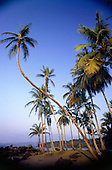 Marenco, Osa Peninsula, Costa Rica. Palm trees leaning over the beach.