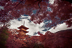 Dramatic artistic photograph of Sanjunoto pagoda of Kiyomizu-dera Buddhist temple in Kyoto, Japan in a beautiful autumn scenery behind red Japanese maple trees.