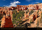 Bryce Canyon Landscape, Queen's Garden Trail, Bryce Canyon National Park, Utah