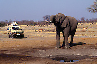 A BULL ELEPHANT drinks from a manmade watering hole in the SAVUTI MARSH which dried up in the 1960's - CHOBE NATIONAL PARK, BOTSWANA