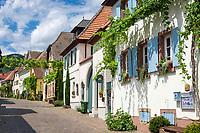 Deutschland, Rheinland-Pfalz, Suedliche Weinstrasse, Rhodt unter Rietburg: Weindorf - Theresienstrasse, im Hintergrund links ist die Rietburg auf dem Blaettersberg zu erkennen | Germany, Rhineland-Palatinate, Southern Wine Route, Rhodt unter Rietburg: wine village - Theresien street