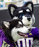 Washington's two mascots pose for a photo.