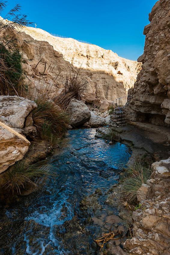 En Gedi Nature Reserve near the Dead Sea, Israel.