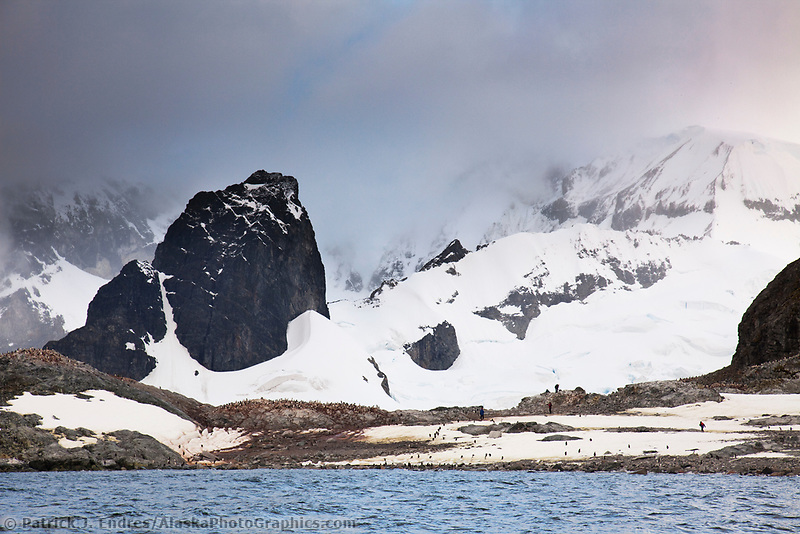 Gentoo penguin colony on Cuverville Island, western Antarctic peninsula.