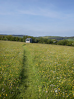 A narrow grass path leads through a mass of swaying buttercups to this contemporary shepherd's hut located in the shelter of a high hedgerow