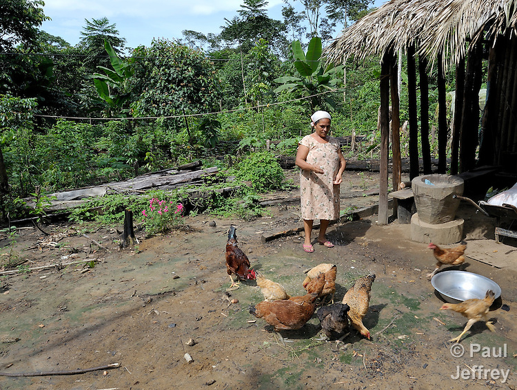 Maria Gregoria Mariadulce feeds her chickens in a clearing in the jungle where she lives. She is a a member of the Esperança Sustainable Development Project, a pioneering jungle community where U.S. Catholic Sister Dorothy Stang worked. Stang was murdered here for her defense of the jungle and landless poor families like this one which survive there.