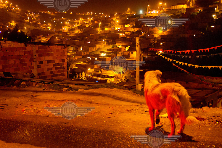 A stray dog on a street at night in a slum neighbourhood south of Bogota.This story by Mads Nissen was partly funded by a grant and when published it should be credited: Funding for this project was provided by the Manuel Rivera-Ortiz Foundation for International Photography.