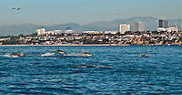 Dolphin Fest in Newport Beach
