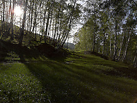 FOREST_LOCATION_90056