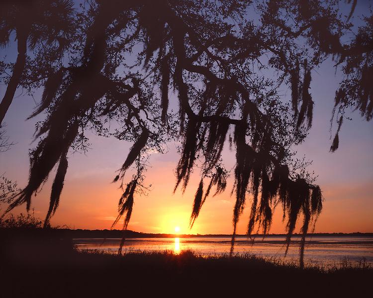 Sunset light on the Wild & Scenic Myakka River; Myakka River State park, FL