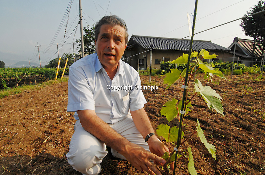 Denis Dubourdieu looks at a vine at an experimental vineyard in the  Makioka area of Yamanashi Prefecture, Japan. Dubourdieu is helping to develop a Japanese white wine that will be eaten primarily with Japanese cuisine.