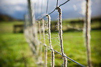 Wire fence in field with sheeps wool, Herefordshire, UK