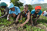 A year after Hurricane Matthew ravaged their farms and homes, these farmers weeding peanuts near Bombardopolis in Haiti's poverty-wracked northwest have rebuilt their agricultural base with help from Lutheran World Relief, a member of the ACT Alliance.