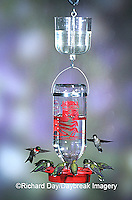 01162-08704 Ruby-throated Hummingbirds (Archilochus colubris) at Best One Hummer Feeder with clear nectar protector Shelby Co.  IL