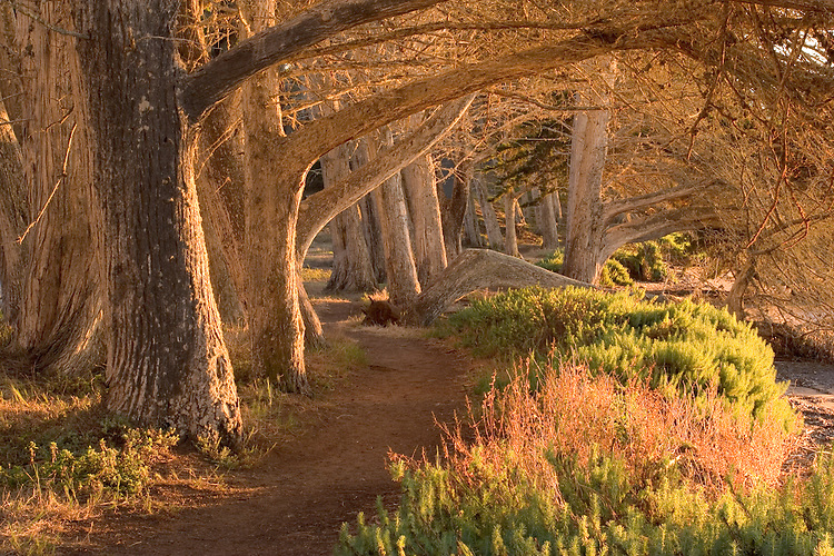 A trail weaves through the overhaning trees along the bay at Morro Bay SP on the California central coast.